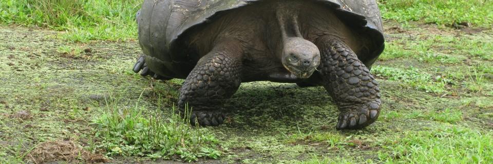 The Galapagos (January 2013)